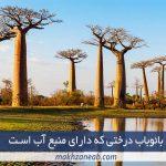بائوباب درختی که دارای منبع آب است