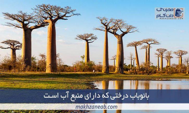 درخت بائوباب منبع آب طبیعی